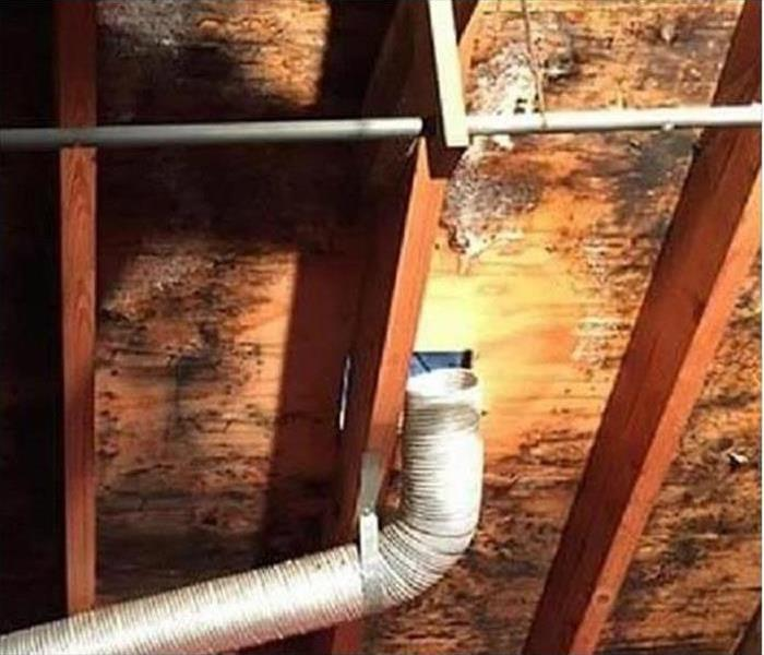 Mold Damage – Fitchburg Home Before