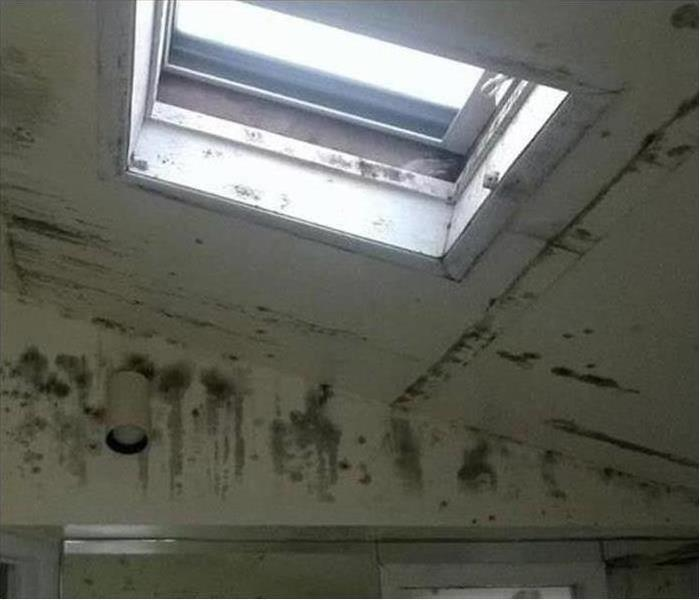 Mold Damage – Fitchburg Commercial Building
