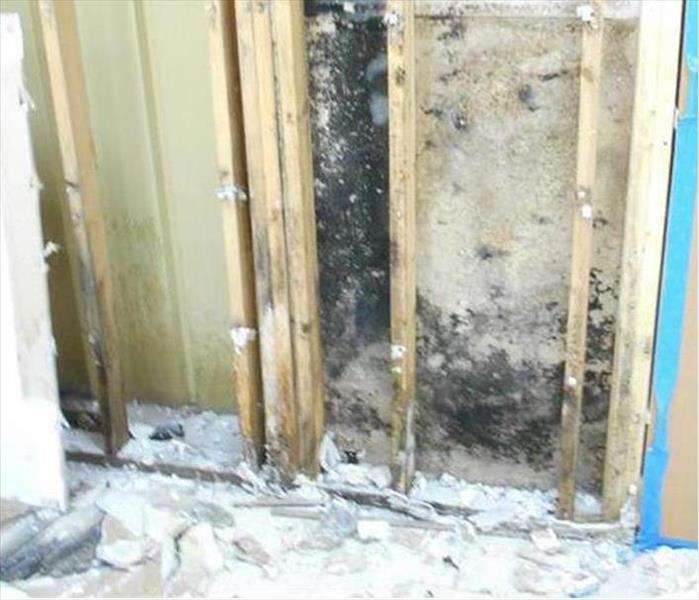 Mold Remediation and Cleanup--Sterling