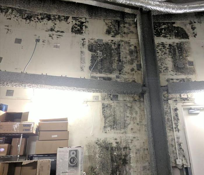 Fitchburg Mold Infested Warehouse