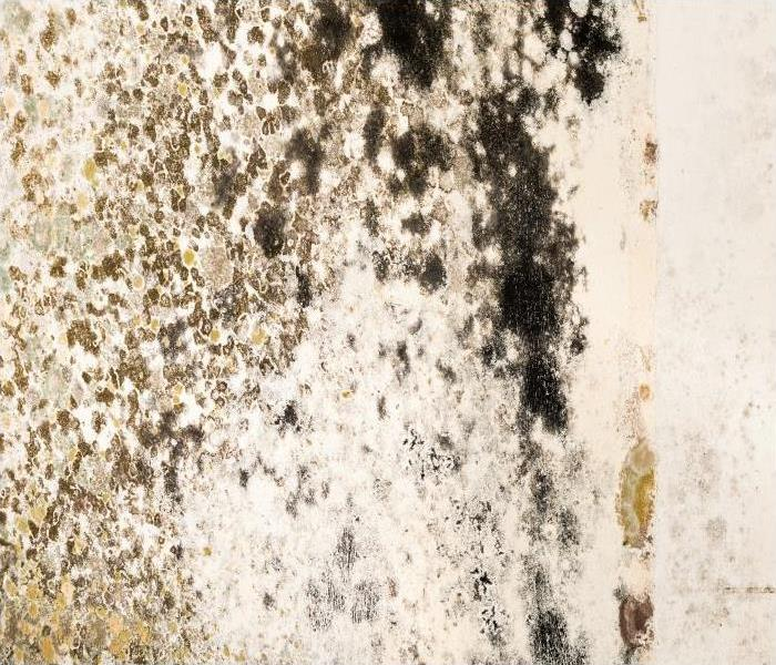 Commercial Mold Damage Remediation With Minimal Disruption To Your Harvard Business
